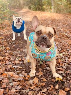 Hundebekleidung und Accessoires